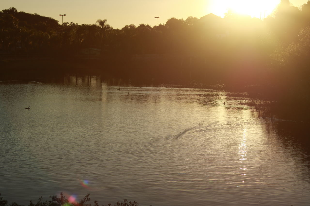 water, reflection, sunset, lake, tree, nature, silhouette, beauty in nature, tranquil scene, tranquility, outdoors, scenics, swimming, waterfront, travel destinations, no people, swan, sky, day