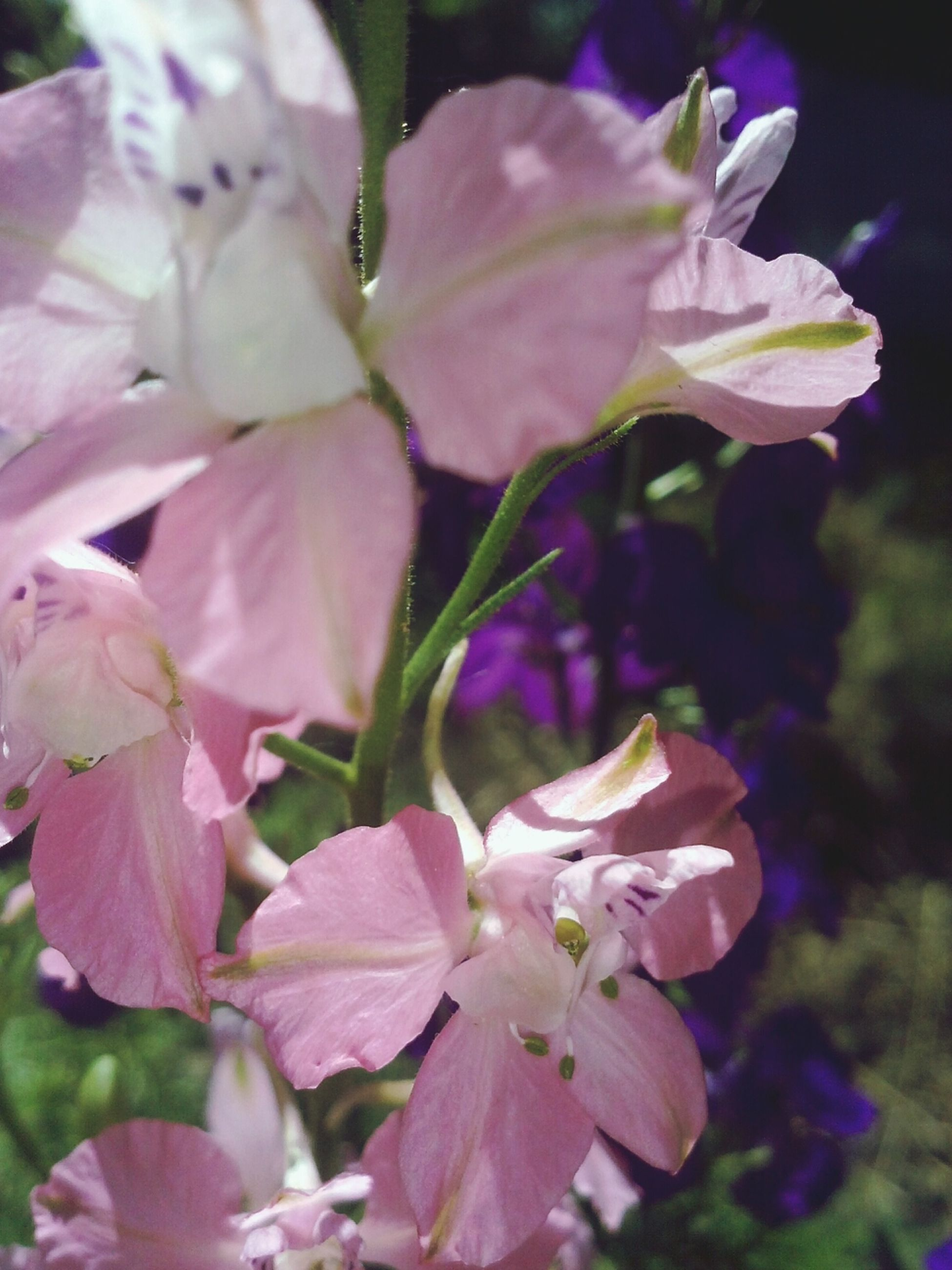 flower, petal, freshness, fragility, growth, beauty in nature, flower head, close-up, nature, pink color, focus on foreground, blooming, stamen, plant, in bloom, blossom, park - man made space, pollen, day, outdoors