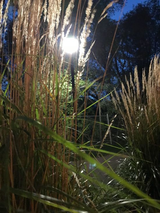 Perspectives On Nature IPhoneography Grass Unedited IPhone Only Night Low Angle View