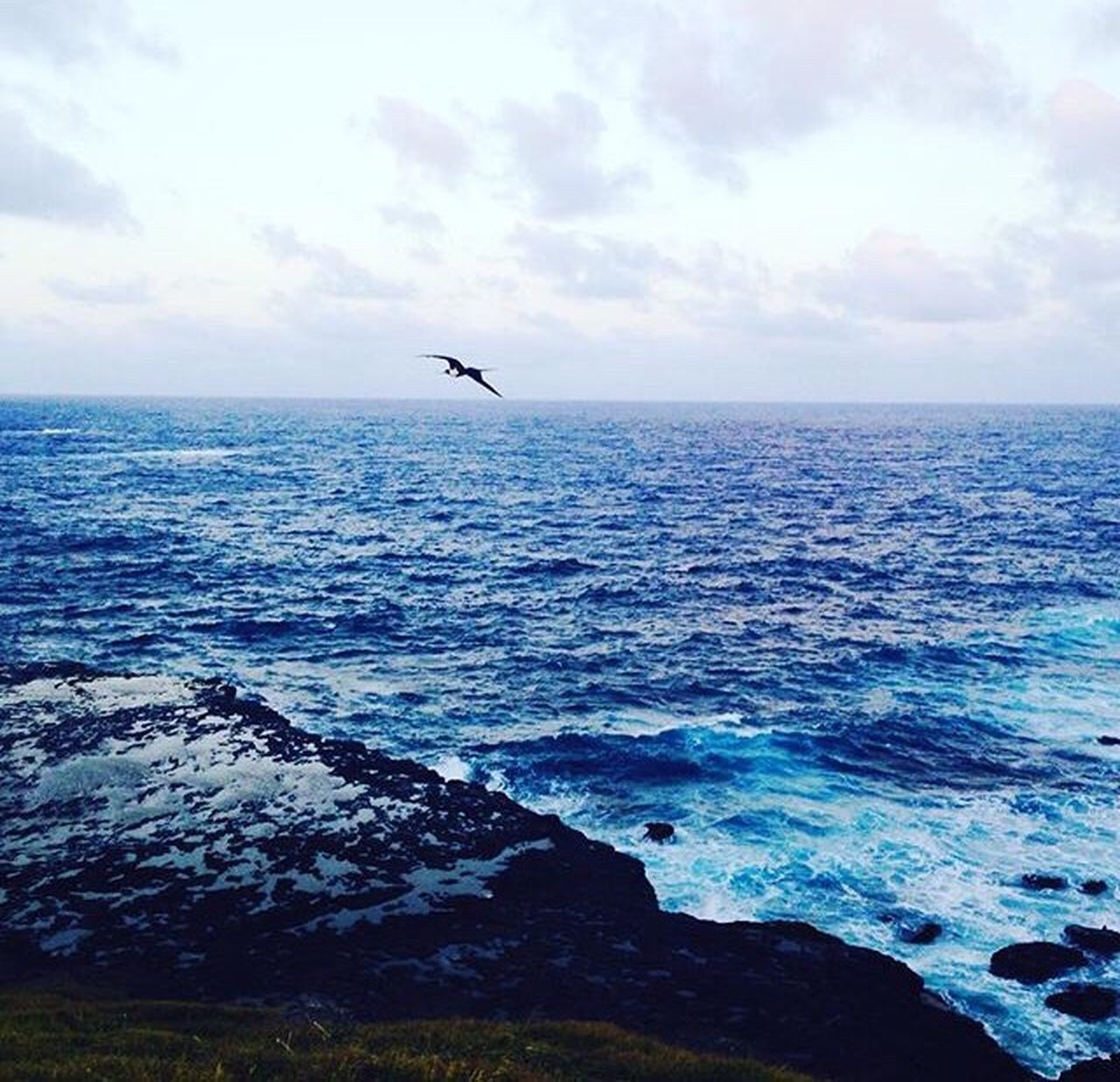 sea, horizon over water, one animal, nature, beauty in nature, water, animals in the wild, animal themes, scenics, sky, mid-air, tranquil scene, flying, outdoors, day, bird, cloud - sky, no people, spread wings
