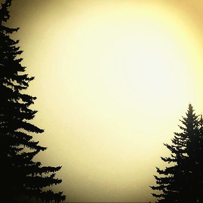 Pinetrees Taking Photos Random Photography Simple Photography Sunny Day Yellowsky Trees Tree_collection  Tree And Sky Simple Beauty Topoftree A Bird's Eye View Milenamulskephotography Follow Please Burning Sky Colors And Patterns Colours And Patterns