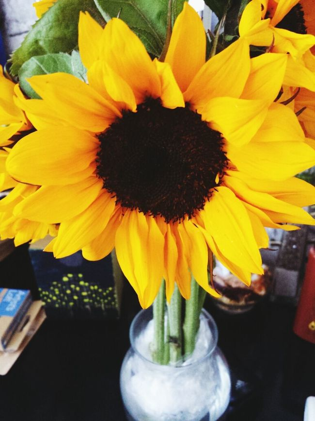 sunflowers ? >>> any flower Favoriteflower Sunflowers Mine