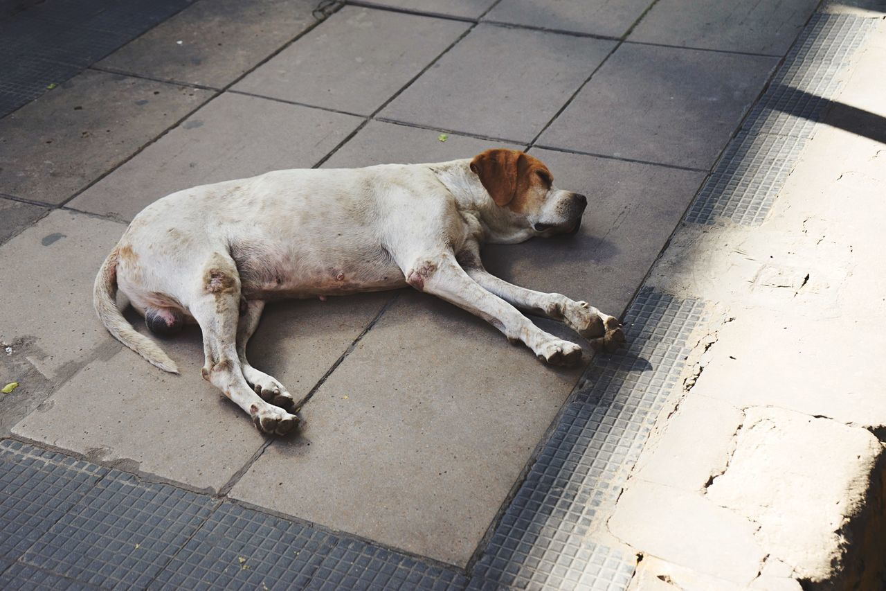 Tough life. Streetphotography Dog Open Edit Light And Shadow