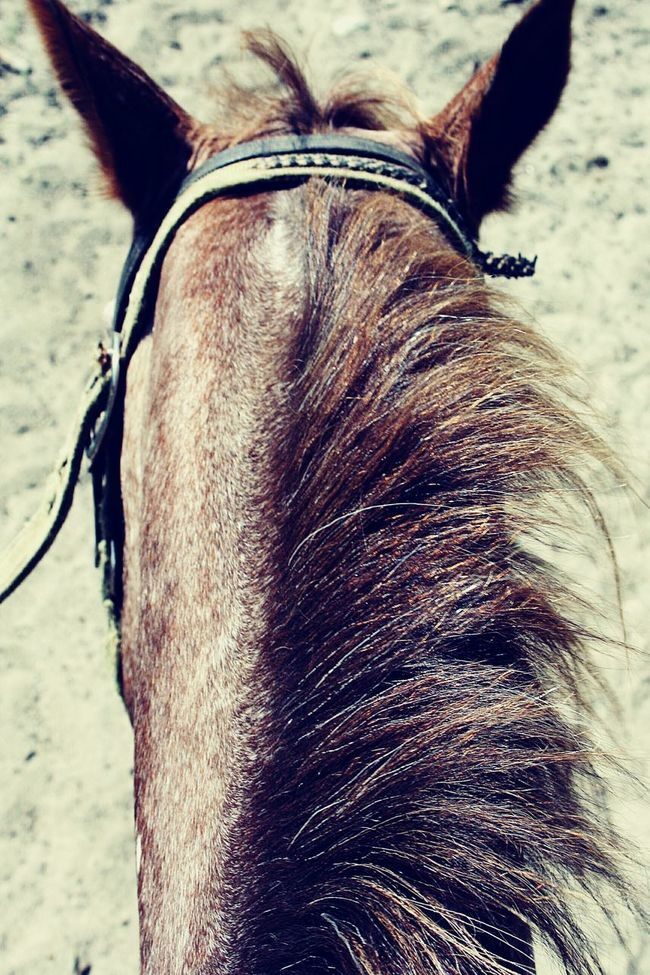 Showcase: February Horse Mane Horse Mane Riding Horses Quiet Equestrian Equestrian Life Horse Riding Serene Outdoors Serenity Elements Magic Moments Aerial View Exploring Happiness Trail Animal Close Up Adventure POV Creative Angle Bridle Horse Tack Bridled