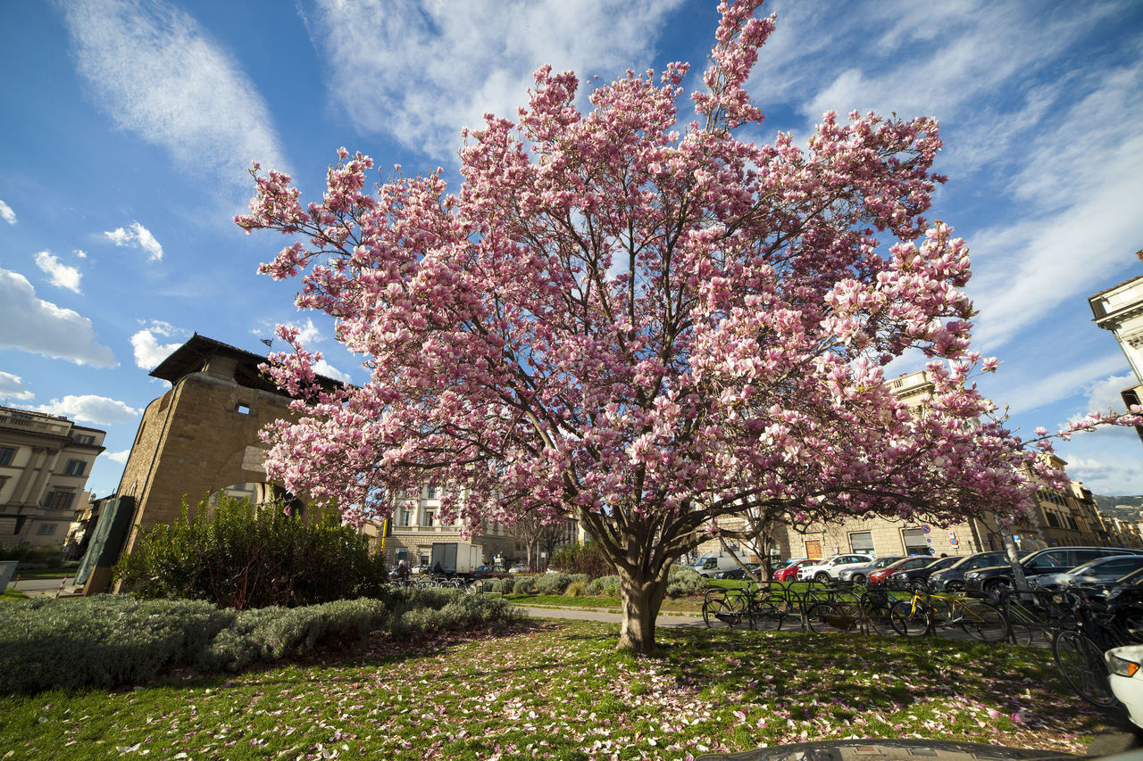flower, tree, blossom, nature, growth, sky, beauty in nature, no people, day, cloud - sky, pink color, architecture, springtime, fragility, outdoors, building exterior, built structure, freshness, branch