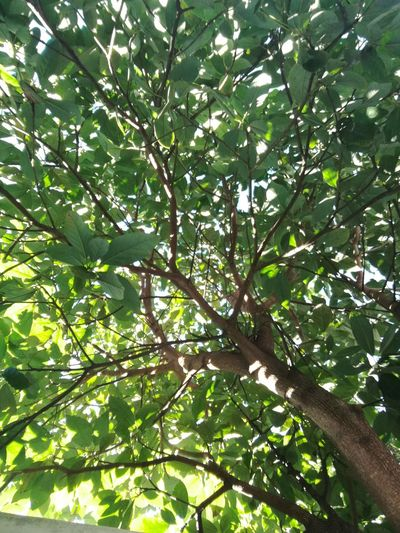 Tree Low Angle View Nature Green Color Outdoors Leaf No People Day Beauty In Nature
