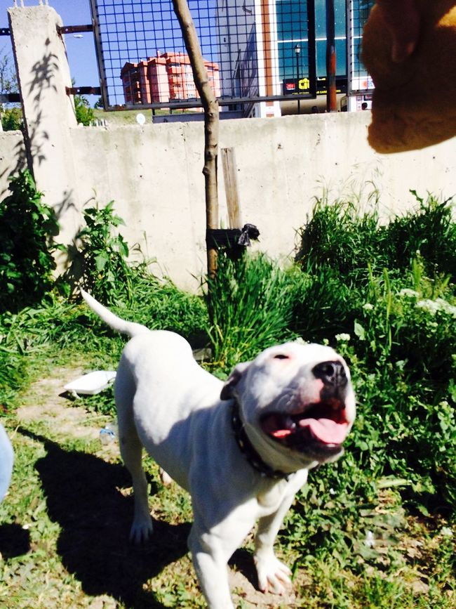 Relaxing I Love My Dog Pitbull Pittbulls Dogs My Dog My Dogs Are Cooler Than Your Kids