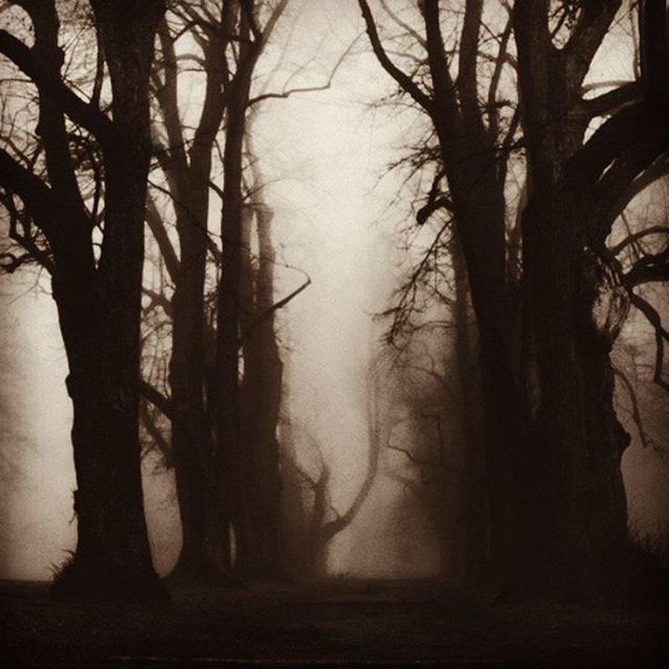 Abandoned Parapsikoloji Church Goth Mistic Match_bw Bw_lover Dark_nature Best_bnw_archive Bnw_captures Nature Naturelovers Insta_bw Pocket_bnw Srs_bnw Rsa_bnw Evil Likeforlike Ayad_bnw Moonlight Wood Darkness Darkwood Night Goth trees nightmare