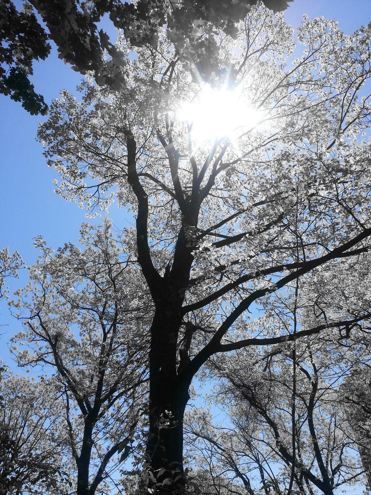 Harlem Riverr Park Washington Heights Trees Sun Branches Blackandblue
