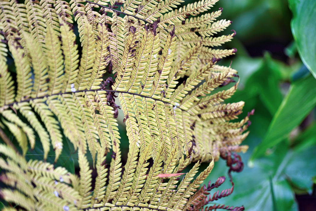 Sensory Garden 6 The Gardens At Lake Merritt Lakeside Park Oakland, Ca. Fern Foliage Leaf Garden _collection Garden_Photography Tranquility Garden Lovers Early Autumn Nature Beauty In Nature Nature_collection Landscape_Collection Landscape_photography Color Transitions Landscape Horticulture Botany Sensory World Time Out Enjoying Life