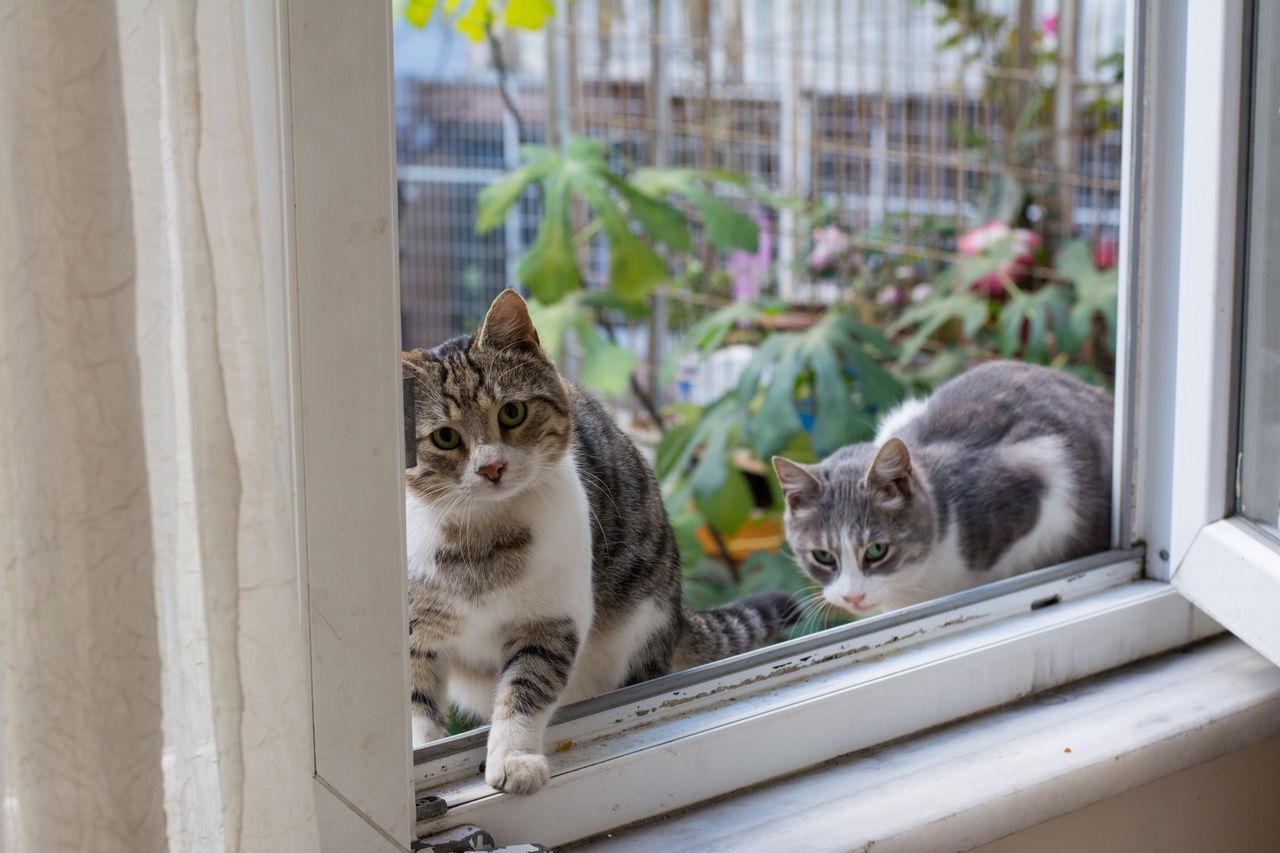 Ajar Animal Themes Cat Close-up Day Domestic Animals Domestic Cat Feline Indoors  Mammal No People Pets Sliding Door Tabby Cat Window Window Sill