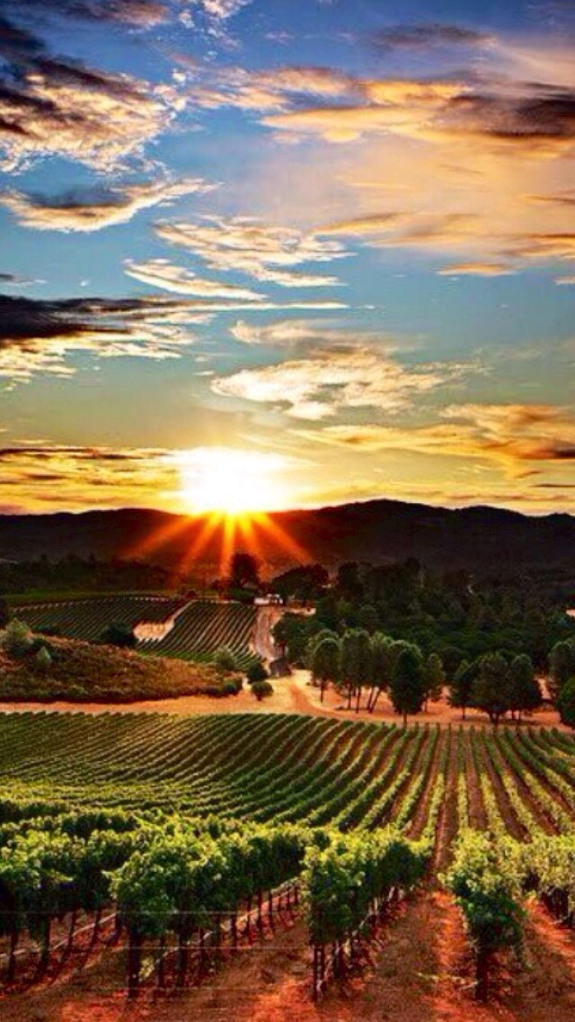 sunset, sun, tranquil scene, tranquility, landscape, scenics, beauty in nature, sky, sunbeam, sunlight, nature, rural scene, idyllic, agriculture, orange color, field, lens flare, cloud - sky, farm, tree