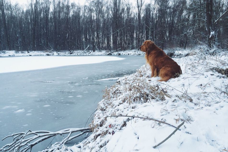 Beautiful stock photos of wohnung, Animal Themes, Bare Tree, Cold, Cold Temperature