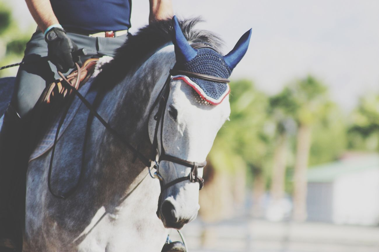 Horse Rider Equestrian Life Pony Horse Show First Eyeem Photo