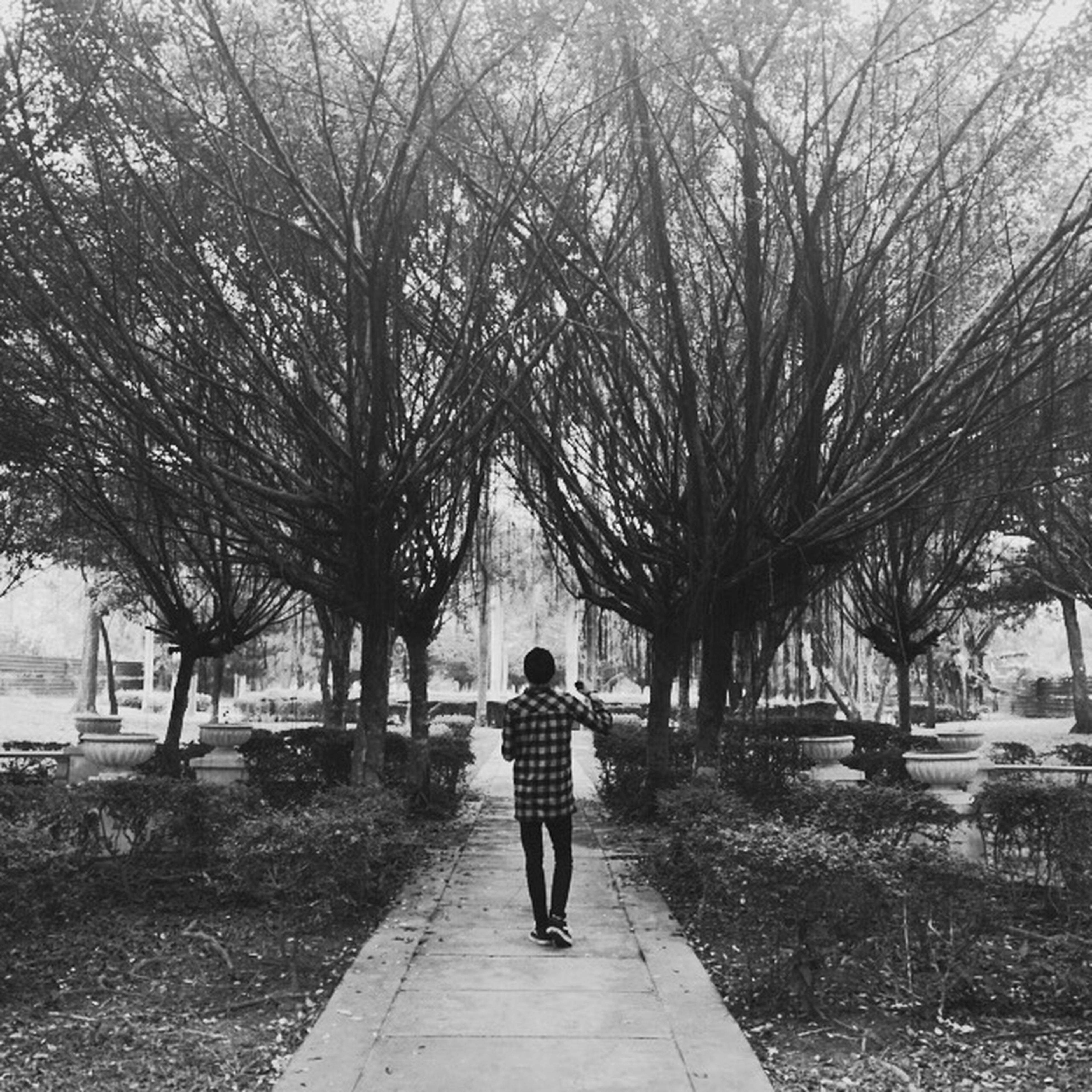 tree, full length, lifestyles, rear view, walking, leisure activity, the way forward, men, person, footpath, casual clothing, transportation, bare tree, street, road, day, outdoors, standing