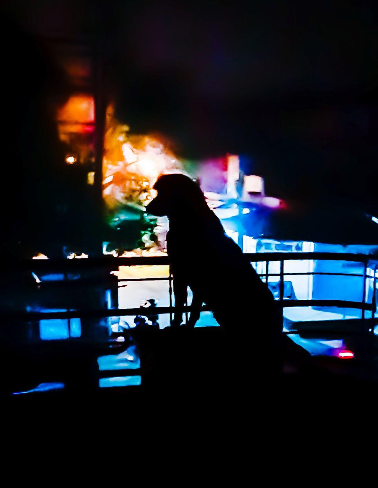 Night Illuminated Dog❤ Dog Animal Dark Figure DarkFigure Streetlight