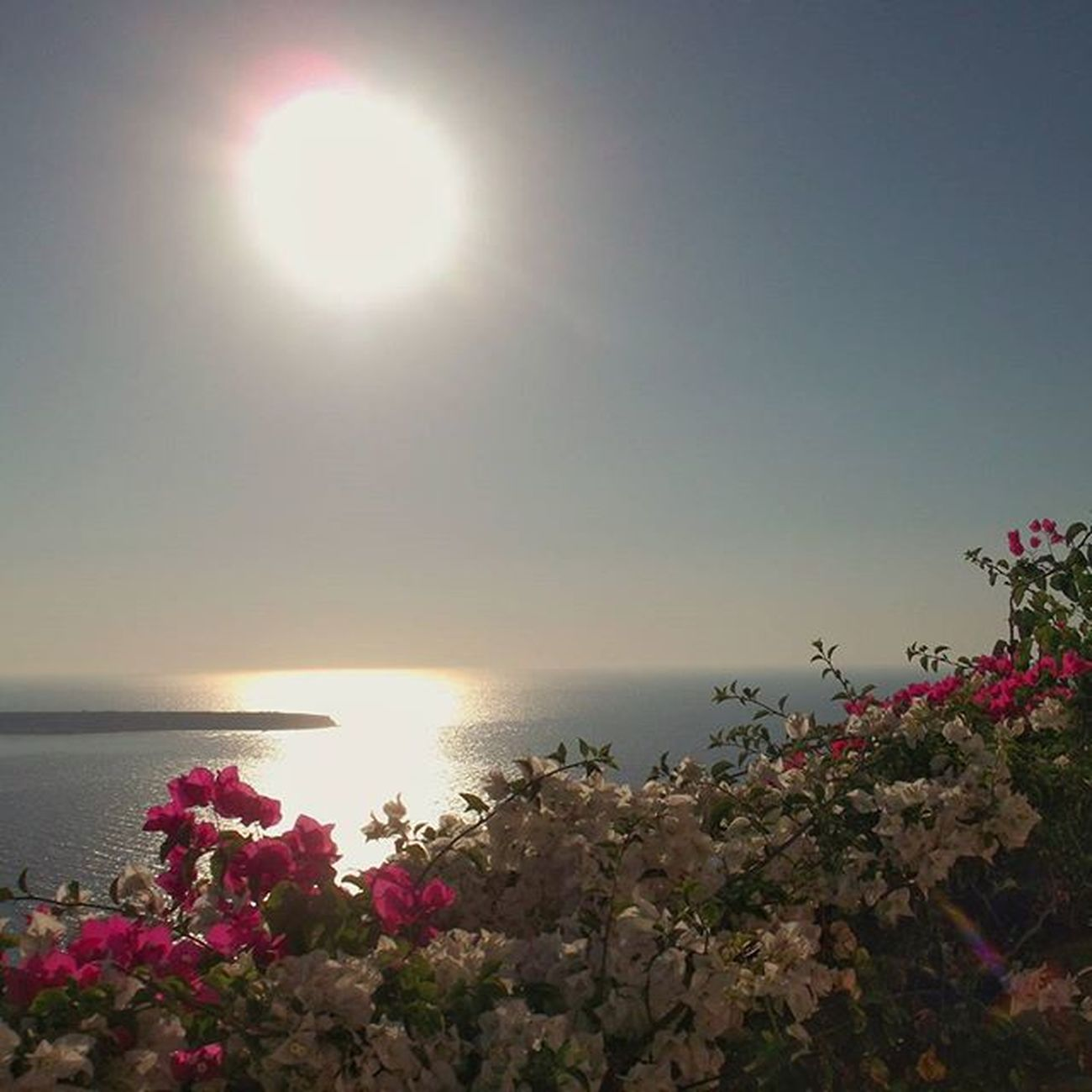 SUNSET AND FLOWERS. OIA VILLAGE, 7.20 pm Oia Oiasunset Oiavillage Santorini Santoriniisland Ilovesantorini Ilovegreece Cyclades_islands Cyclades Greekyogurt Greeksunset Sunset Flowers Flowerstagram Sun Greece2015 Greecestagram Greecelovers Greecelover_gr Grecia Estateingrecia