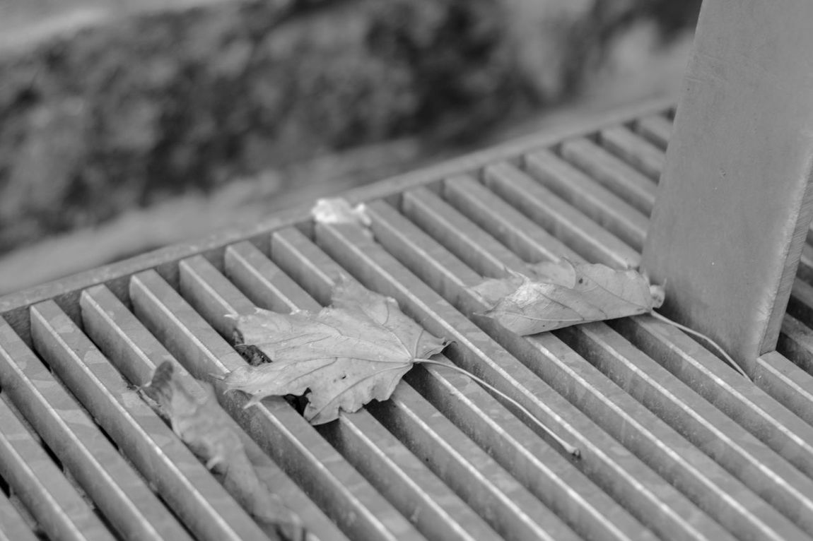 fall in the city ... Bench EyeEmNewHere Close-up Colseup Day Leaf No People Outdoors