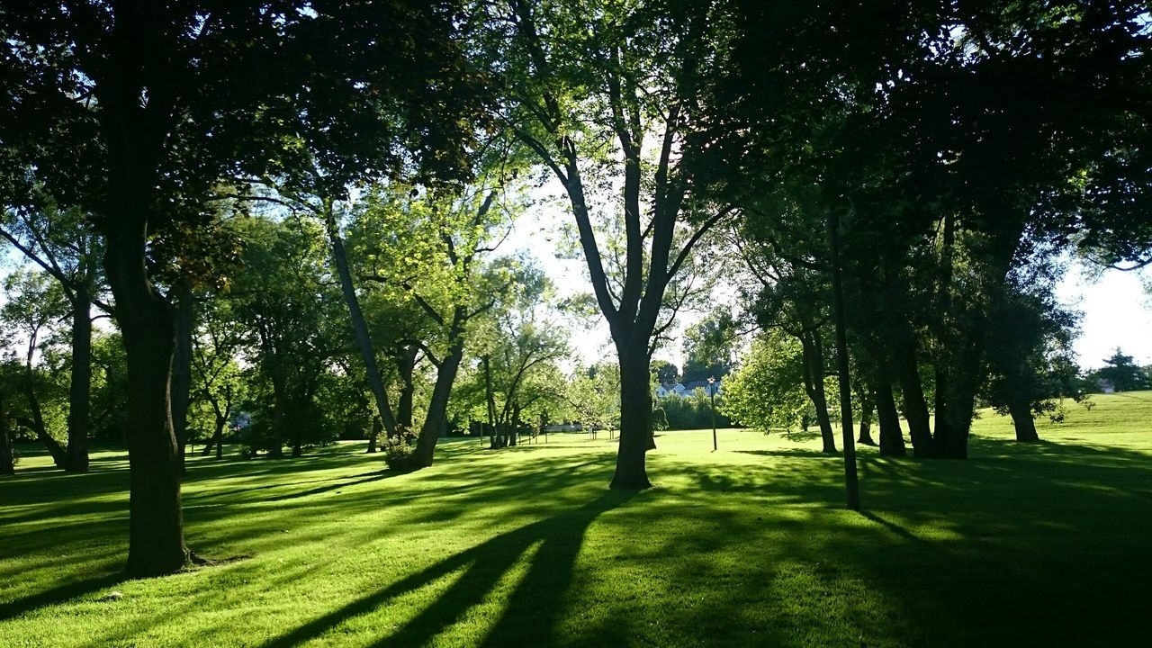 tree, grass, nature, tranquility, beauty in nature, green color, sunlight, growth, tranquil scene, shadow, landscape, scenics, day, outdoors, no people, golf, golf course, green - golf course, sky