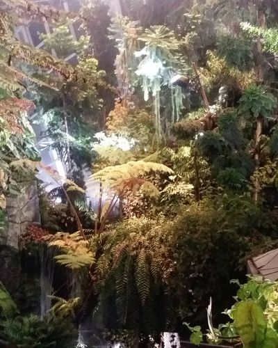 Plants Plants PLANTS Cloud Forest Cloud Forest Spring 2017 Gardens By The Bay Singapore