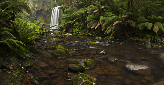 Hopetoun Falls in the Great Otway National Park. Beauty In Nature Flowing Flowing Water Forest Great Ocean Road Green Color Growth Hopetoun Falls Landscape Lush Foliage Nature Otways Outdoors Panorama Plant Ranges The Great Outdoors - 2016 EyeEm Awards Tranquil Scene Tranquility Tree Waterfall