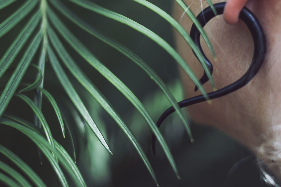 In the jungle Close-up Curves And Lines Ear Earings Exotic Growth Human Body Part Leaf One Person Plant Real People Break The Mold