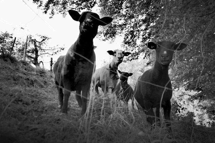 Bnw_friday_eyeemchallenge BNW_farm_animals