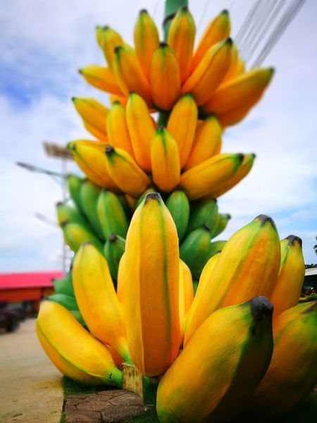 Flower Tropical Climate Freshness Yellow Nature Fruit Sky Close-up Banana Outdoors Food Stories