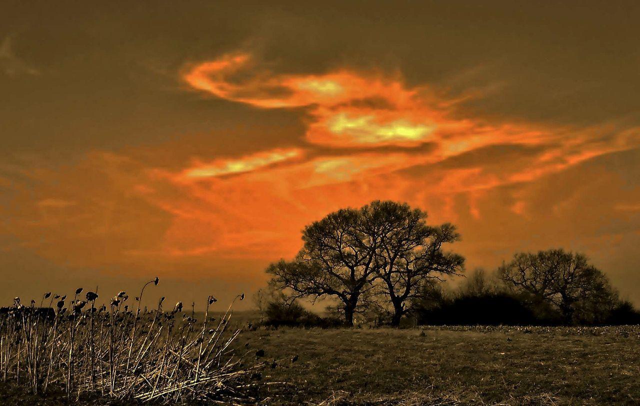 Landscape Sunset_collection Landscape_Collection Landscape_photography Cloudscape Clouds Sunsets Of Eyeem Clouds Of Eyeem Clouds And Sky Clouds Collection Grasses Grasses Against Sunset Trees And Sky Tree Trees Trees Silhouettes Trees And Clouds