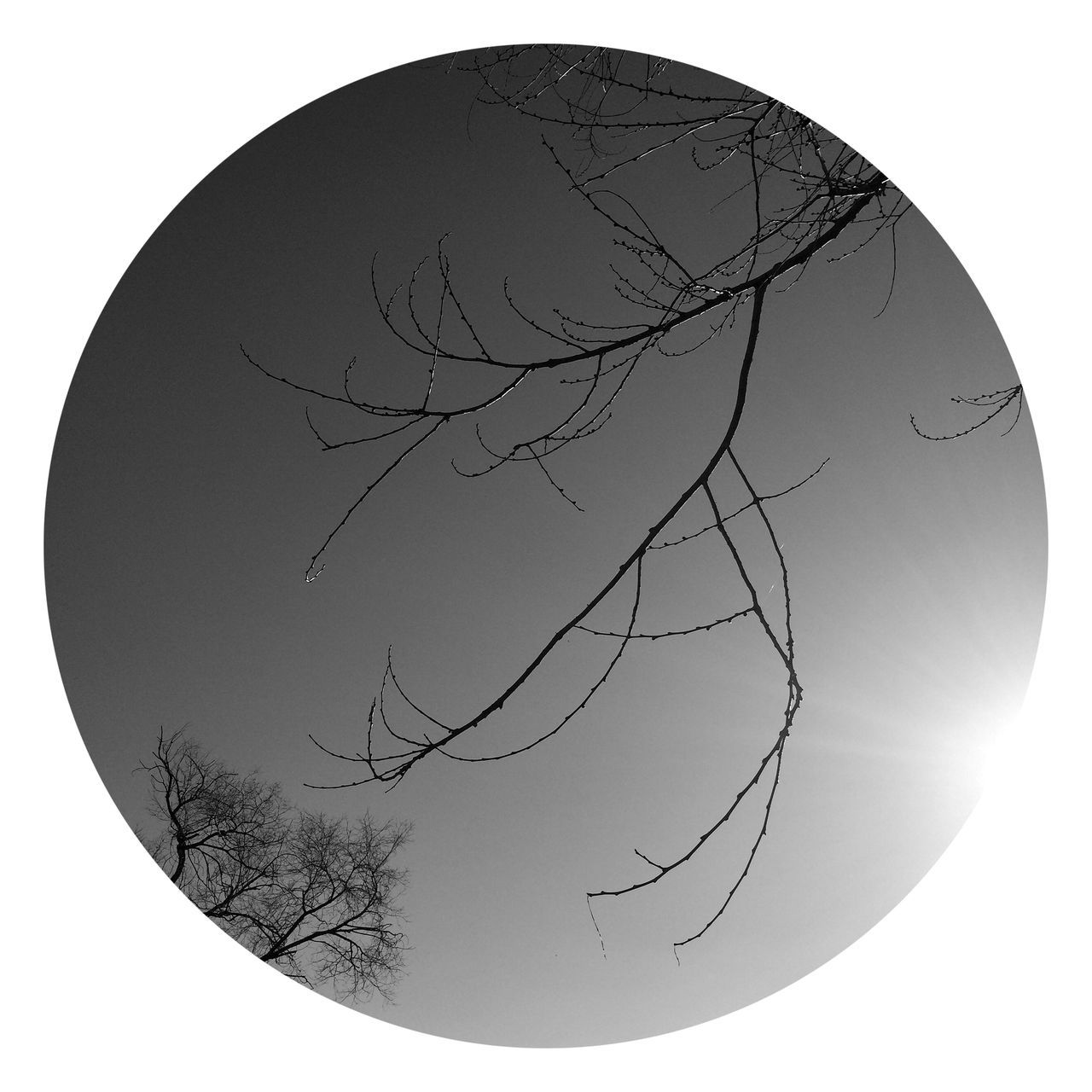 Bare Tree Clear Sky Tree Branch Outdoors Nature No People Day Beauty In Nature Blackandwhite Round Sun