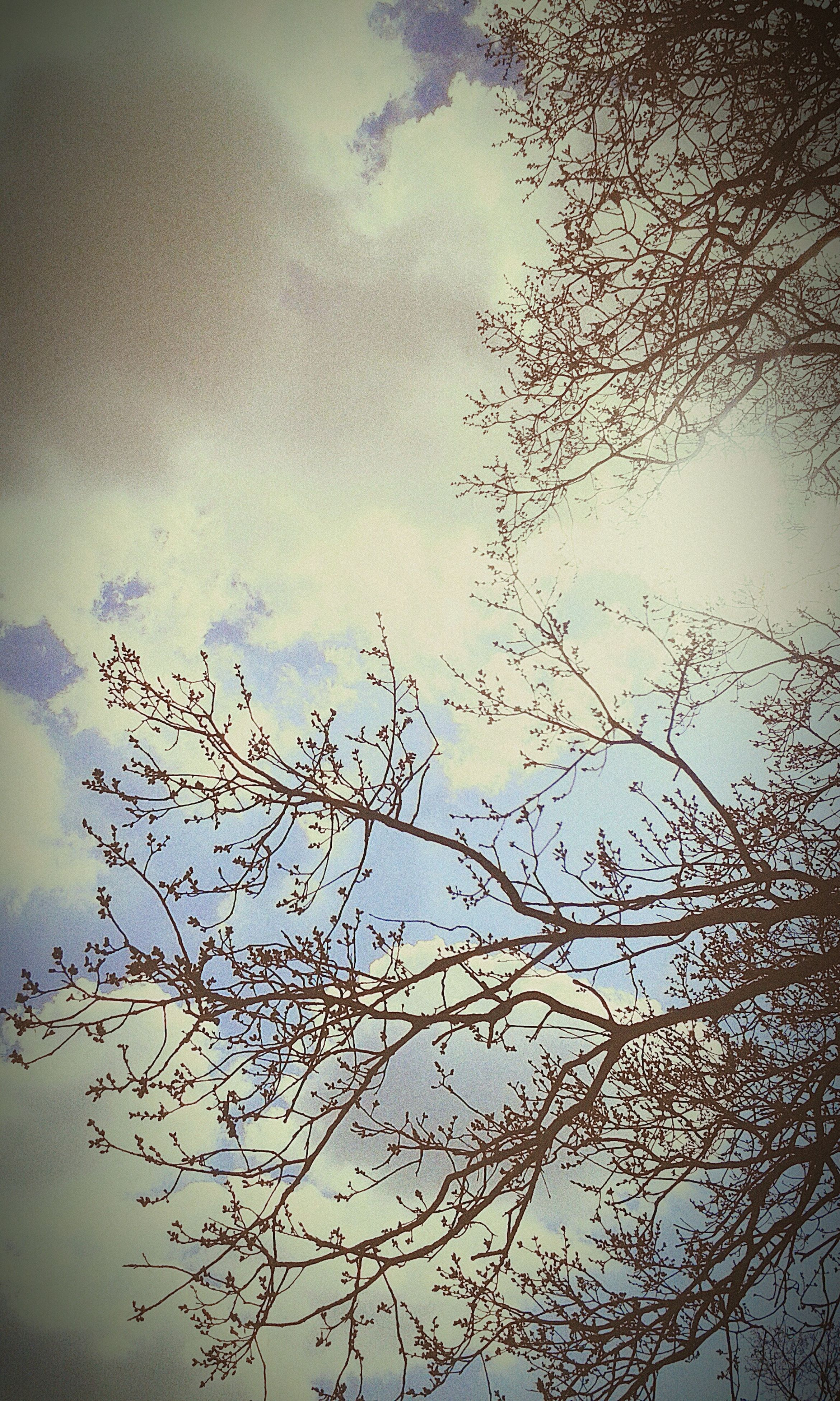 branch, low angle view, sky, tree, bare tree, nature, beauty in nature, tranquility, growth, cloud - sky, bird, no people, outdoors, silhouette, day, scenics, dusk, twig, high section, cloud