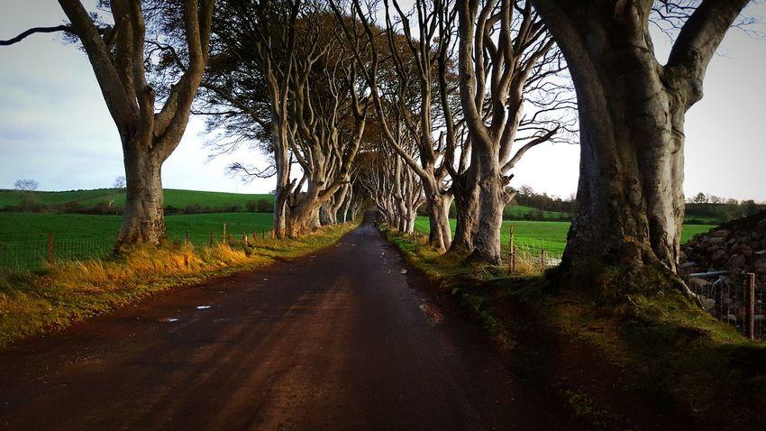 Game Of Thrones Northcoast Ireland The Dark Hedges Co Antrim Trees