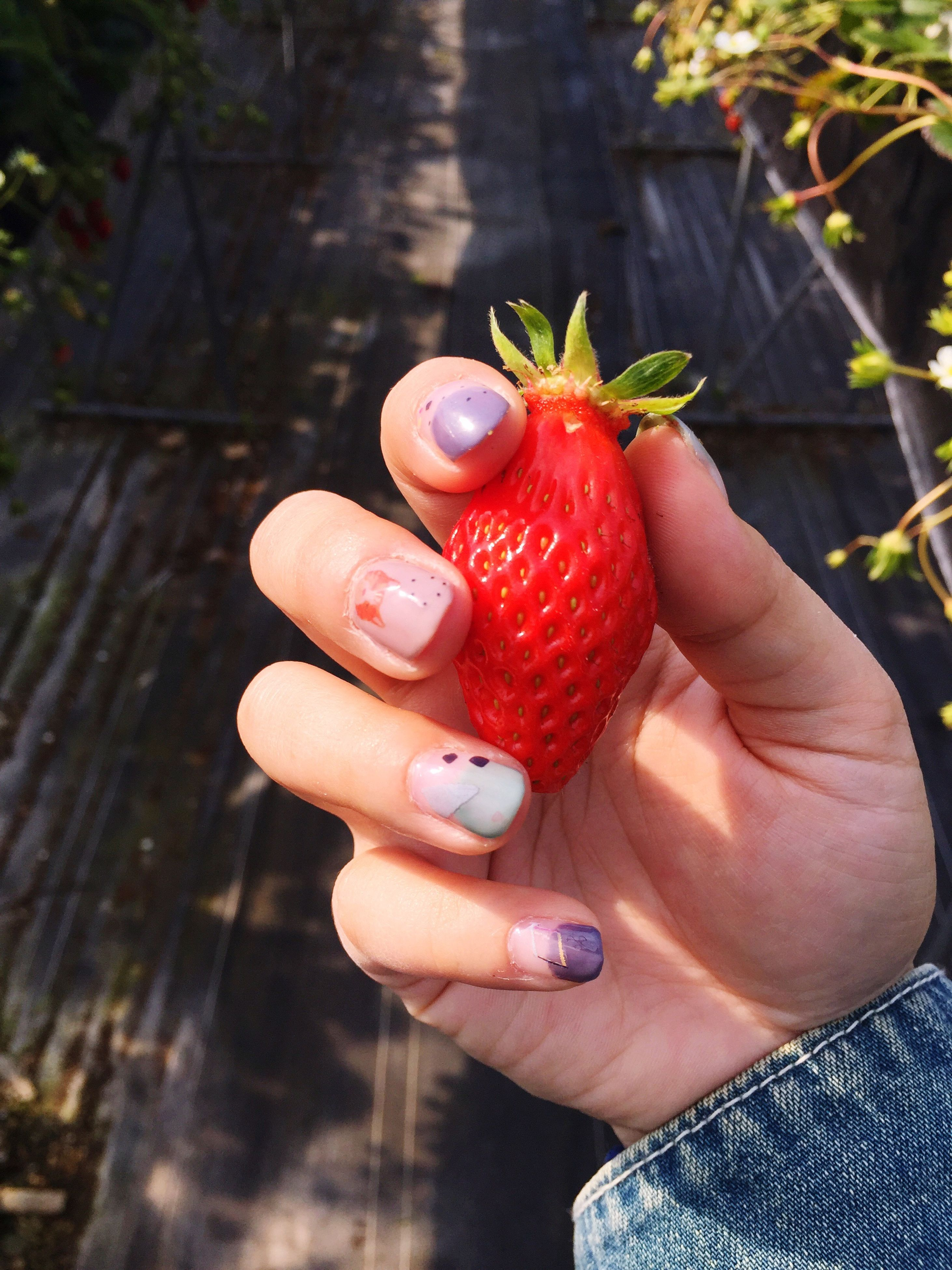 person, holding, food and drink, fruit, food, human finger, healthy eating, part of, red, freshness, cropped, strawberry, close-up, unrecognizable person, focus on foreground, personal perspective, lifestyles