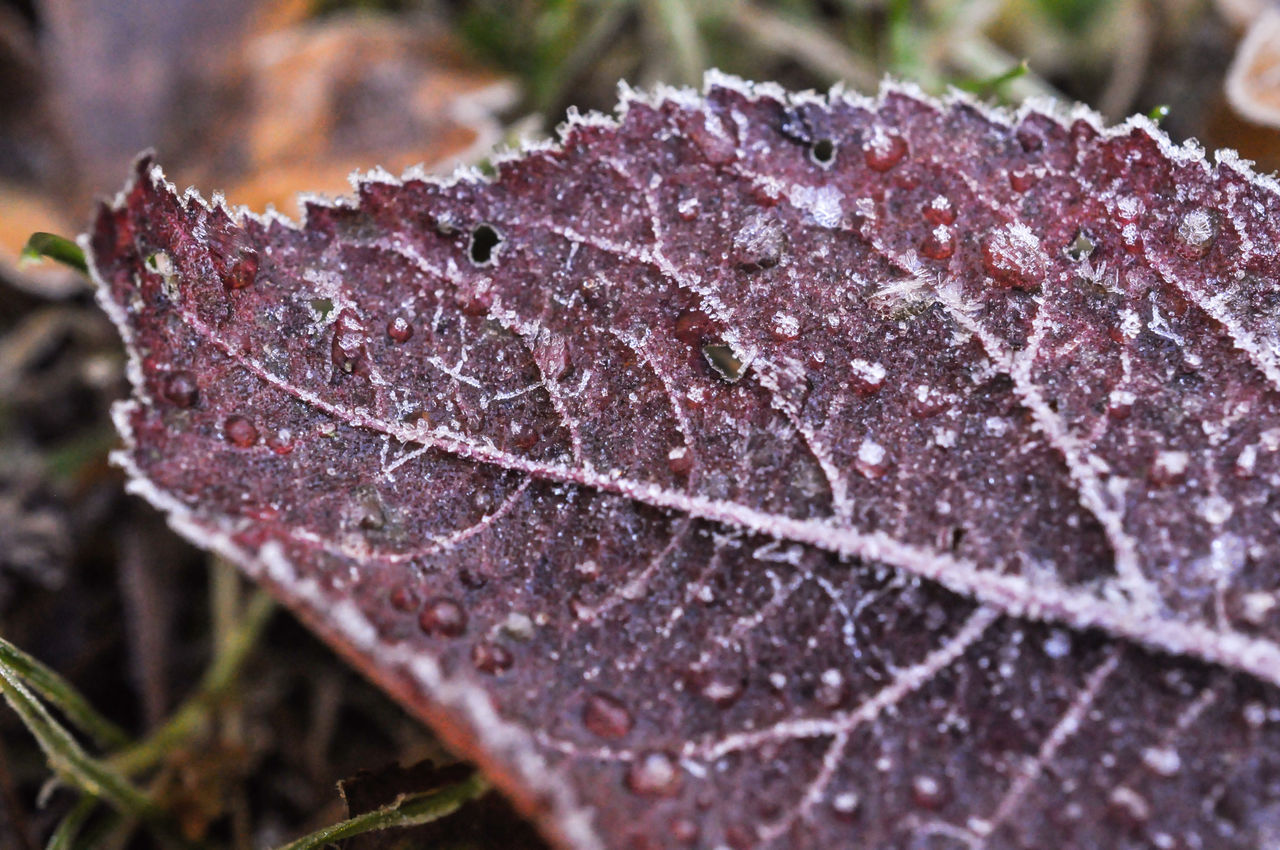 Die Kunst der Natur Close-up Leaf Germany Photos Official EyeEm © Cold Temperature EyeEm Nature Lover Frost Ice Winter Ice Crystal EyeEm Germany EyeEm Best Shots - Nature Maximum Closeness GERMANY🇩🇪DEUTSCHERLAND@ Eiskristalle Winterzauber Macro Art Backgrounds The Week On EyeEem Focus On Foreground