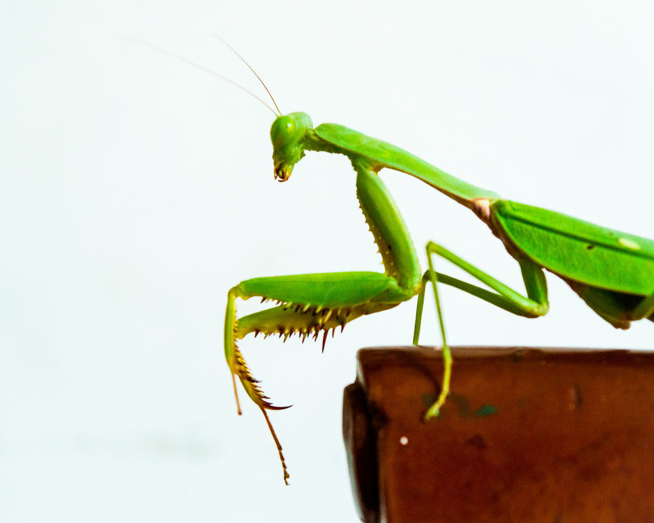 Insect Green Color Animal Themes One Animal Close-up Nature No People Day Nature Beauty In Nature Beauty Redefined