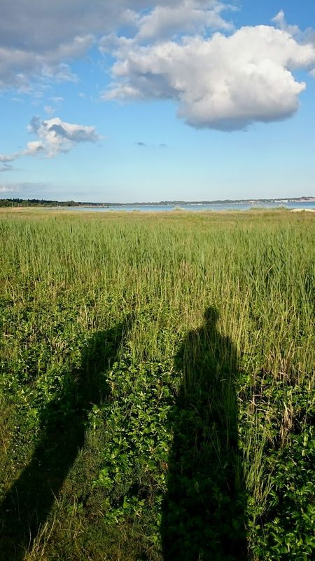 Summer Solstice On the Longest Day of the year me and dad take an evening walk and admire the View at the Bay of Ebeltoft Ebeltoft Vig 43 Golden Moments Femmøller Strand Showcase June Two Is Better Than One