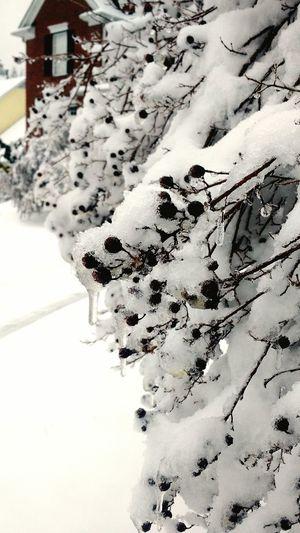Snow Frozen Nature Trees OpenEdit