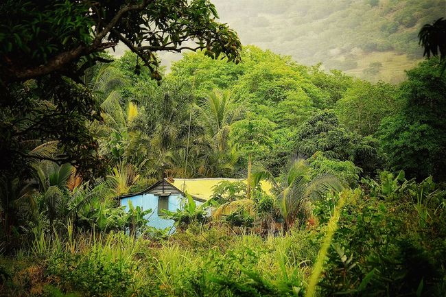 Pour vivre heureux vivons cachés Landscape_Collection Case Mauritius EyeEm Nature Lover NEM GoodKarma Green