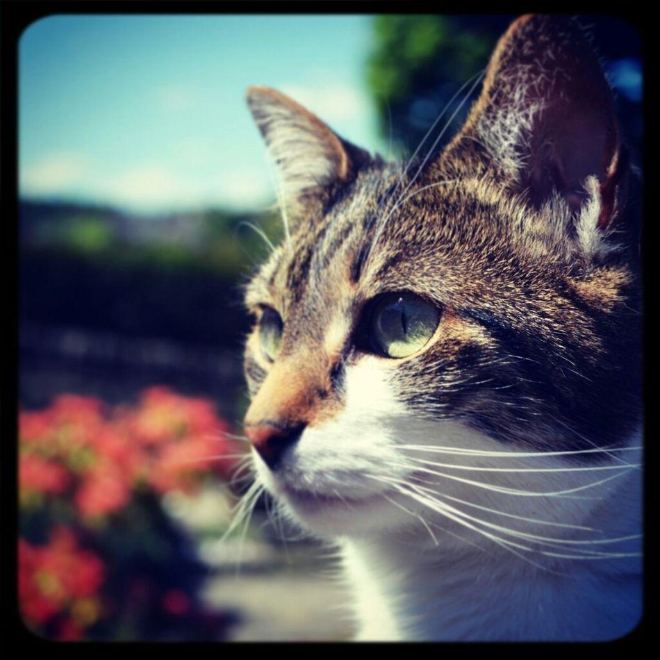 My Cat Lola