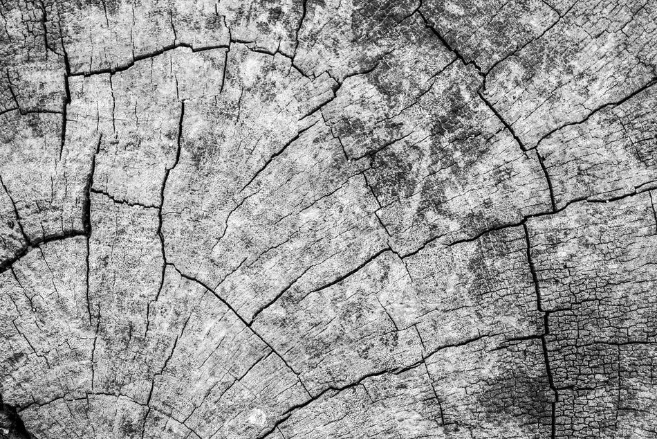 Arid Climate Backgrounds Close-up Cracked Day Full Frame Nature No People Outdoors Pattern Textured  Tree Ring