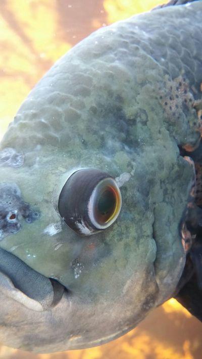 Up close and personal Botanical Gardens Buffalo Fish