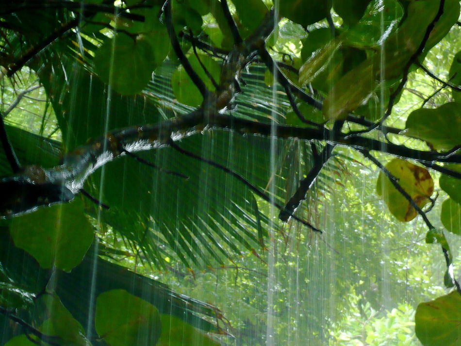 Beautiful stock photos of costa rica, Beauty In Nature, Branch, Day, Freshness
