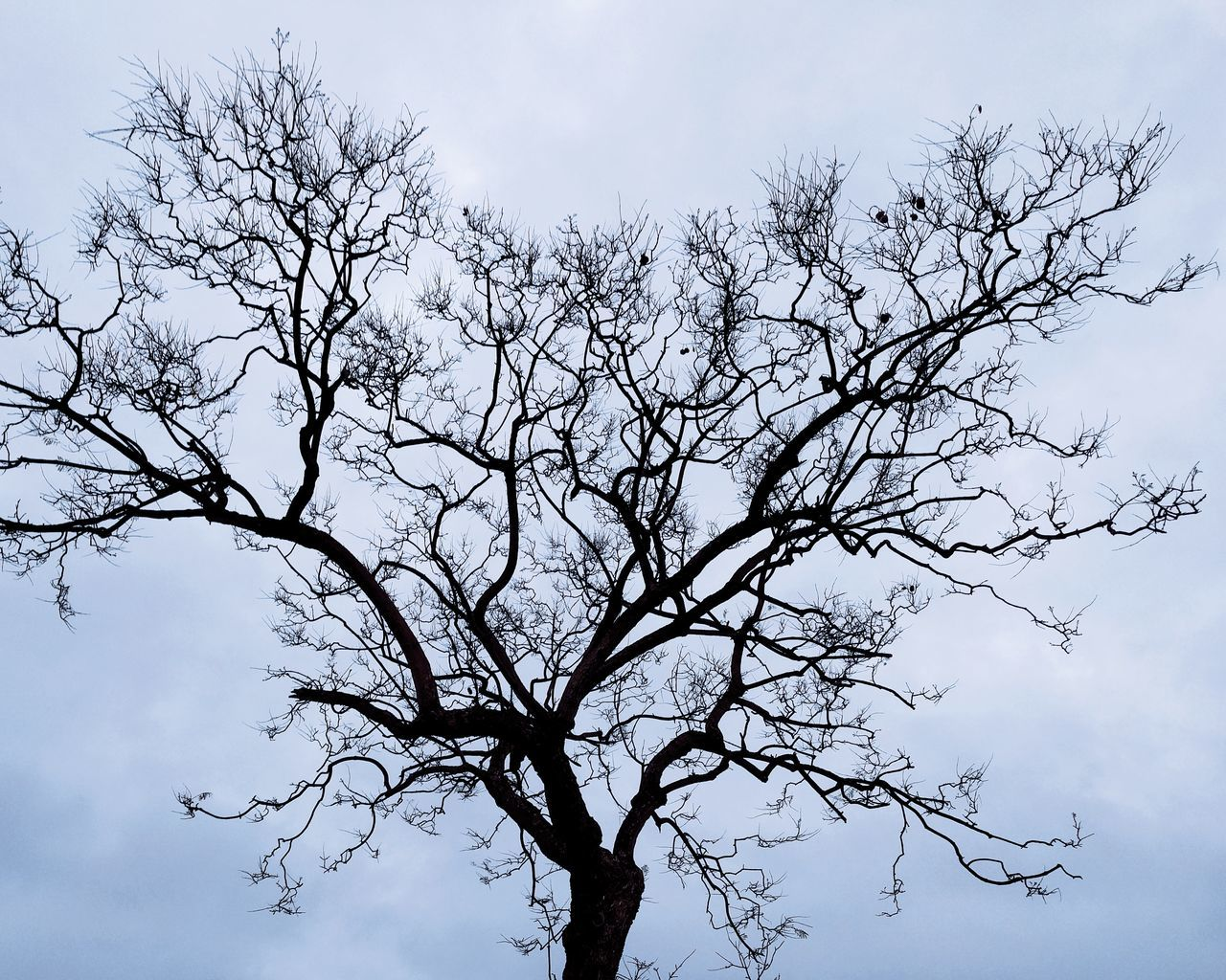 Branch Tree Sky No People Nature Silhouette Outdoors Bare Tree Beauty In Nature Day Tree Overcast Day Rain Clouds Sharpness