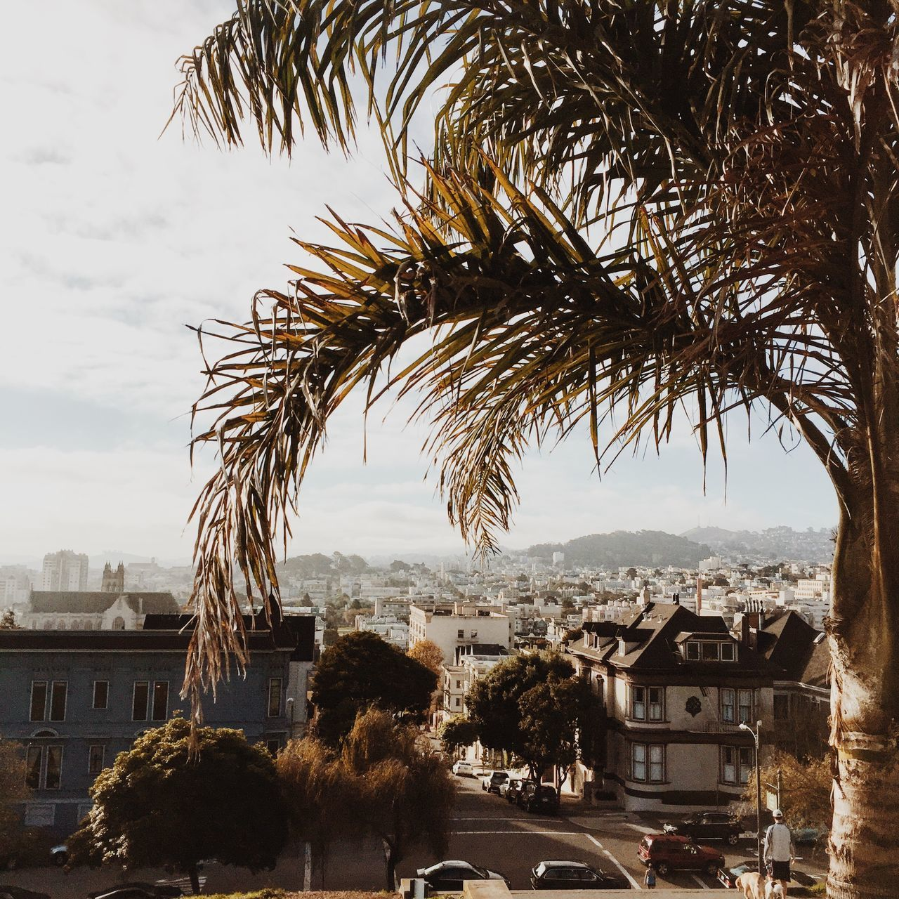 View of San Francisco, USA. Architecture Building Exterior Built Structure California City Cityscape Day IPhone IPhoneography Nature No People Outdoors Palm Tree San Francisco Sky Square Travel Destinations Tree USA Water