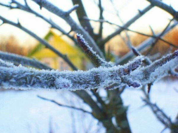 Winter Snow ❄