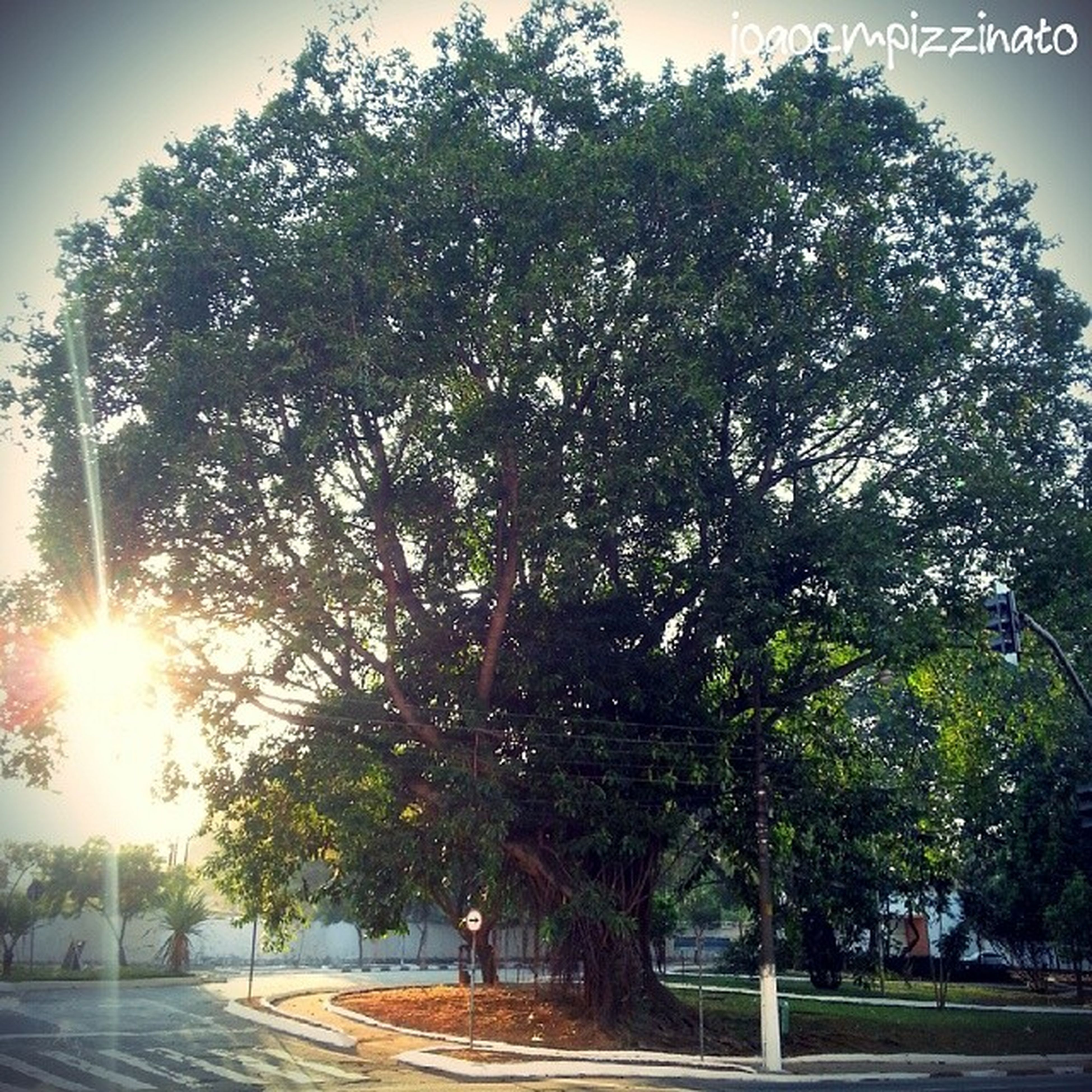 tree, transportation, road, the way forward, street, sunlight, car, growth, land vehicle, sky, nature, branch, outdoors, treelined, mode of transport, street light, incidental people, road marking, shadow, day
