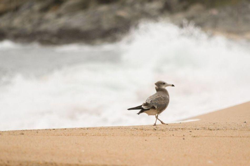 Seagull Sokcho Beach