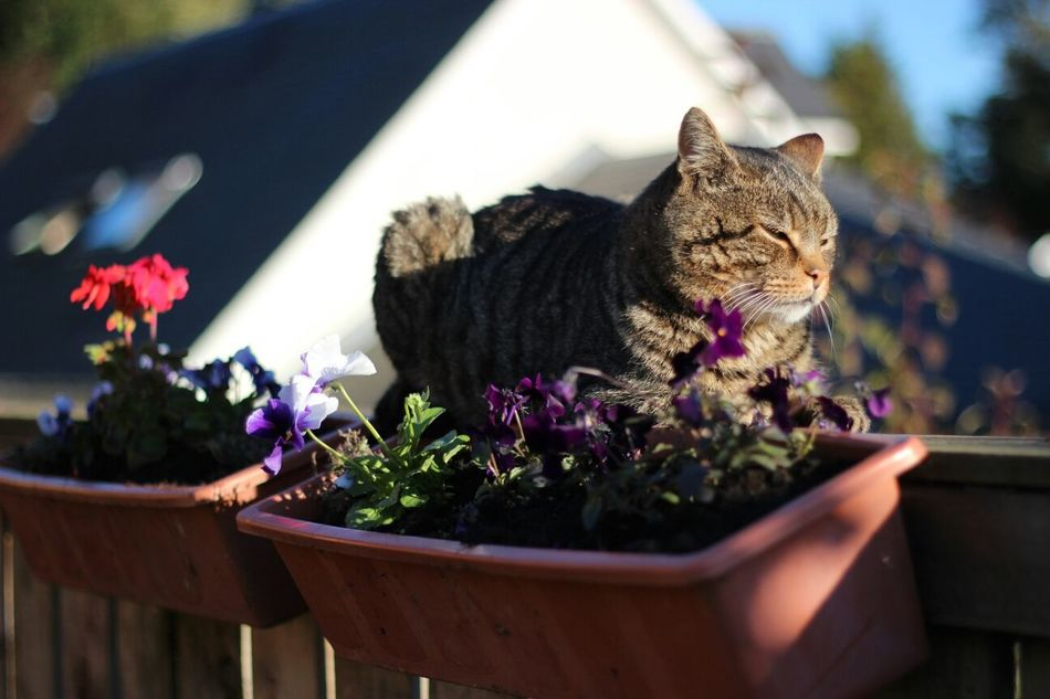 Beautiful stock photos of cat, Animal Themes, Brechin, Cat, Day