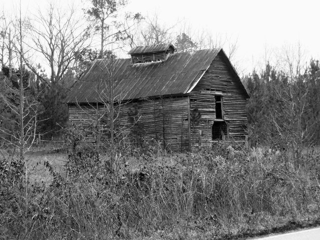 Abandoned Architecture Bare Tree Barn Building Exterior Built Structure Clear Sky Damaged Day Deterioration Farmhouse Field Growth House Nature Non-urban Scene Obsolete Outdoors Plant Remote Rural Scene Scenics Sky Tranquil Scene Tranquility