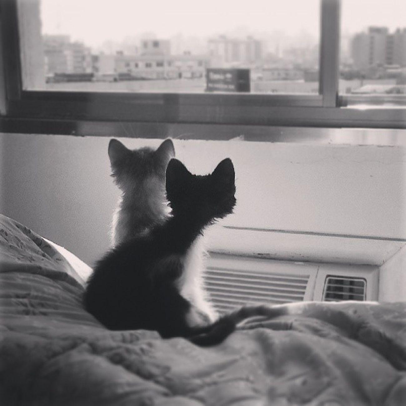 Contemplação! Cats Catsofinstagram Catstagram Juliuseamelie